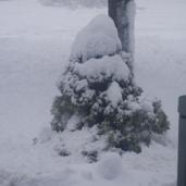 snow pic 2013,jpg