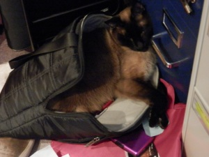 Tojo makes a nest in my workbag